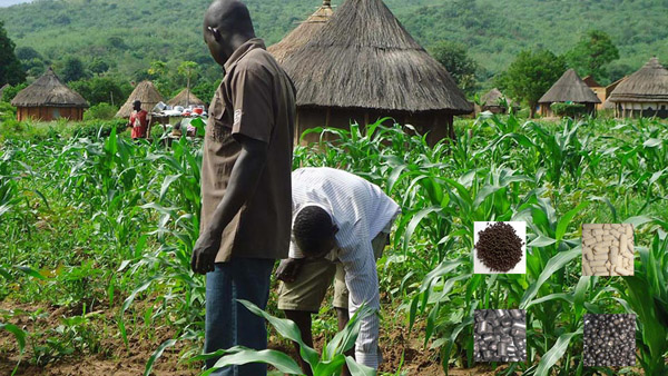 benefits of organic fertilizer to agriculture in Nigeria