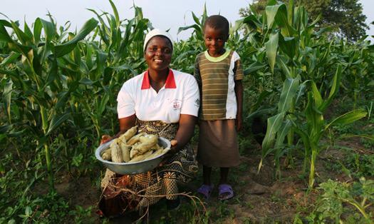 Zimbabwe agriculture