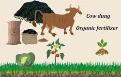 cow dung organic fertilizer