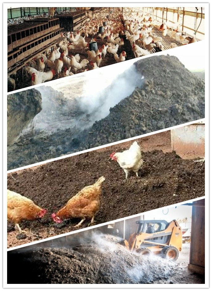 chicken-farm-manure