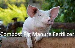 compost-pig-manure