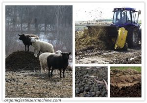 sheep manure compost