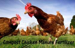 compost-chicken-manure-s
