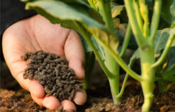 vinasse-organic-fertilizer-s